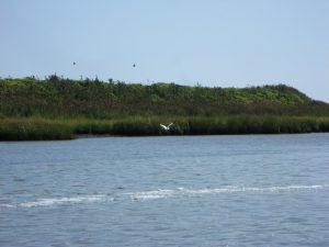 2012_08_31_ShoreBird