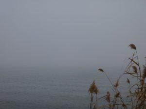 2013_11_17_fogGrass