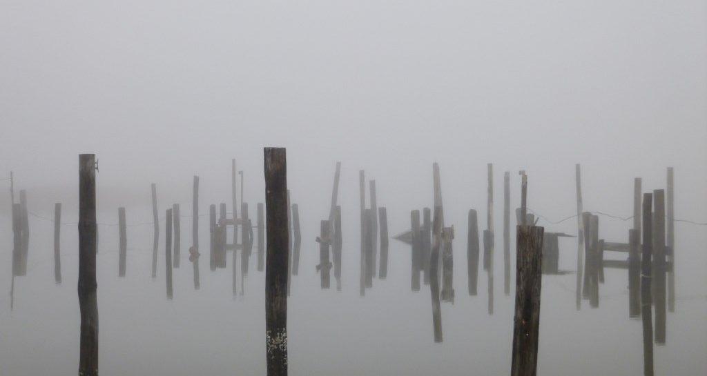 2013_11_17_fogPilings.jpg