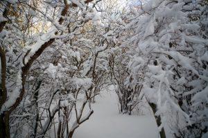2015_03_06_07_snowArbor