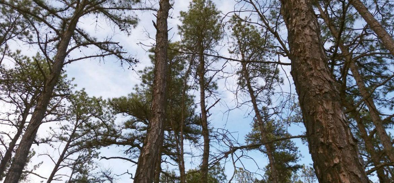 2017_02_25_trees