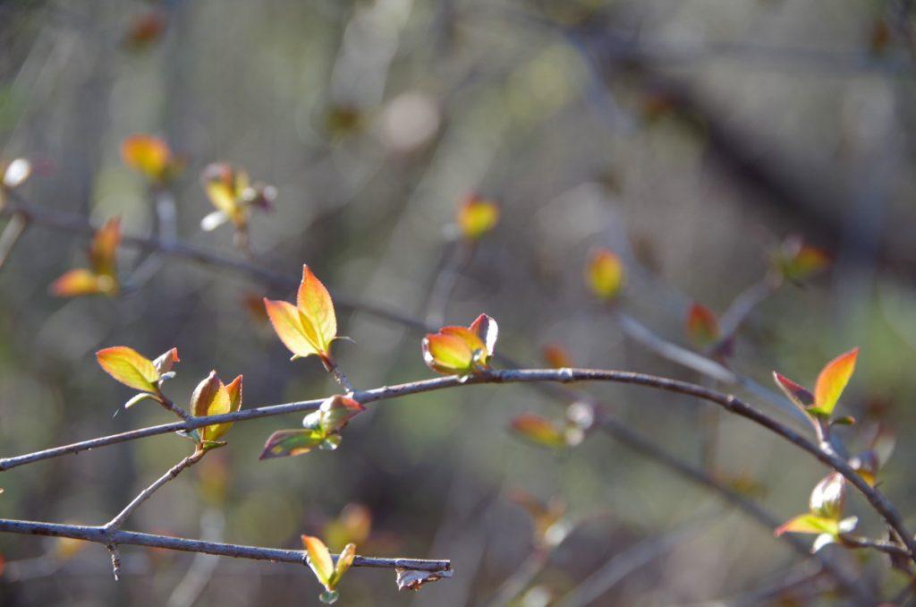 tiny leaves