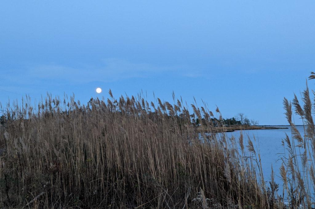 Moon over Dune Grass