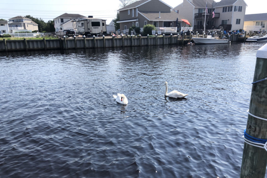 More Horrifying Swans